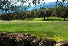 O campo verde Imagens de Stock