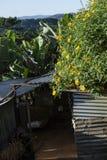 O campo vietnamiano com flor selvagem do girassol no amarelo ao longo da rua, Dalat é cidade para o curso, com paisagem da beleza fotografia de stock