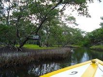 O canal de encanto em um pântano dos manguezais fotos de stock royalty free