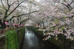 O canal de Nakameguro esta área é sakura popular Imagem de Stock