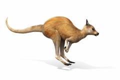 O canguru que salta em um fundo branco Imagens de Stock Royalty Free