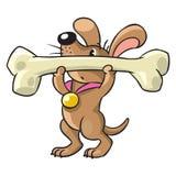 o Canino-atleta levanta a barra Imagem de Stock Royalty Free