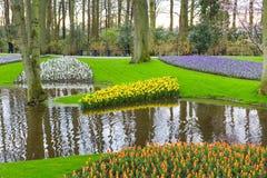 O canteiro de flores com tulipas vermelhas, narciso amarelo amarelo floresce a florescência na mola Fotografia de Stock