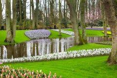 O canteiro de flores com tulipas vermelhas, narciso amarelo amarelo floresce a florescência na mola Fotos de Stock