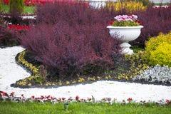 O canteiro de flores decorativo com os arbustos multi-coloridos com os vasos cerâmicos com gerânio Imagem de Stock Royalty Free
