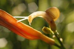 O caracol brilhante Imagens de Stock