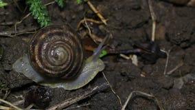 O caracol de jardim desaparece no dissipador, detectando o perigo filme