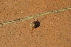 O caracol está deixando algum limo em telhas do cotto em meu jardim Fotografia de Stock