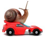 O caracol rápido gosta do piloto do carro Conceito da velocidade e do sucesso As rodas são borrão devido a mover-se Fundo branco  Imagens de Stock Royalty Free