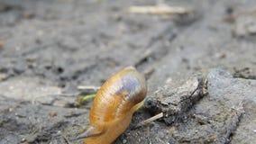 O caracol rasteja na terra vídeos de arquivo