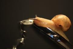 O caracol rasteja no relógio Imagem de Stock
