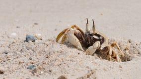 O caranguejo bonito Fotos de Stock