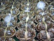 O caranguejo chinês do mitene ou caranguejo peludo de Shanghai Imagens de Stock