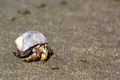 O caranguejo de eremita Foto de Stock