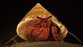 O caranguejo de eremita senta-se em um coral