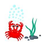 O caranguejo vermelho bonito com bolhas da água e as algas vector o mar tropical p das criaturas do mar dos desenhos animados da  Fotografia de Stock