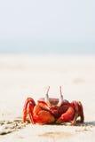 O caranguejo vermelho grande que senta-se na areia Foto de Stock Royalty Free