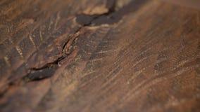 O carpinteiro cobre a chapa do mordente, madeira seca, tiro acelerado vídeos de arquivo