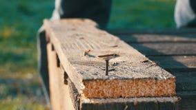 O carpinteiro masculino martela o prego do ferro em uma prancha de madeira filme