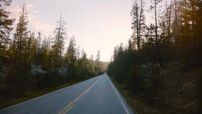 O carro com câmera está movendo-se ao longo da estrada de floresta calma bonita entre pinheiros no por do sol no movimento lento  video estoque