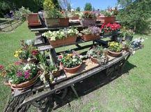o carro de madeira velho festooned com muitos potenciômetros das flores no meado Fotos de Stock