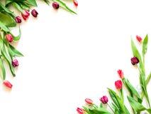O cartão atual com tulipa floresce o molde dos cantos fotos de stock royalty free