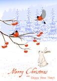 O cartão do Natal e do ano novo com pássaros do dom-fafe em Rowan Tree Branch e em uma lebre branca recolhe bagas dentro Foto de Stock