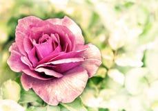O cartão do vintage com flores cor-de-rosa aumentou sobre o fundo do bokeh Imagens de Stock Royalty Free