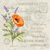 O cartão elegante da alfazema Imagem de Stock Royalty Free
