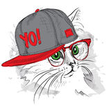 O cartaz com o retrato do gato da imagem no chapéu do hip-hop Fotos de Stock