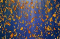 O carvalho amarelo sae do fundo do azul do outono Fotografia de Stock Royalty Free