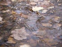 O carvalho da floresta do outono sae sob a opinião de ângulo do gelo Fotos de Stock