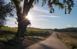 O carvalho do vale de Califórnia com sol do amanhecer irradia na região vinícola de Paso Robles em Califórnia central fotografia de stock royalty free