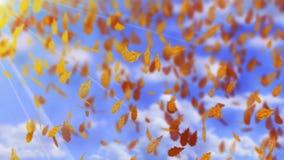 O carvalho marrom de queda do outono sae em um fundo brilhante do céu azul de dia ensolarado Tempo da queda O vento e seca as fol vídeos de arquivo