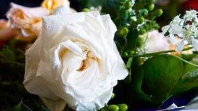O casamento branco levantou-se Imagem de Stock