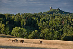 O castelo arruina Trosky Foto de Stock