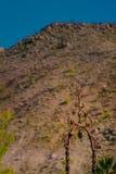 O castelo o Vale da Morte de Scotty, Califórnia Fotografia de Stock Royalty Free