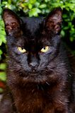 O CAT PRETO em meu jardim fotos de stock royalty free