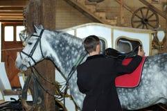 O cavaleiro aperta um selar-girth Imagens de Stock