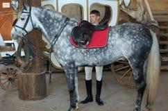 O cavaleiro aperta um selar-girth Imagens de Stock Royalty Free