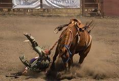 O cavaleiro do Bronc toma uma queda Imagem de Stock Royalty Free