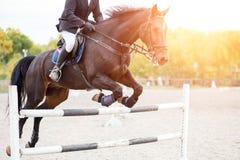 O cavaleiro do cavalo masculino salta sobre o obstáculo na competição Fotos de Stock Royalty Free