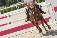 O cavaleiro em um cavalo da castanha apenas saltou sobre um obstáculo fotografia de stock royalty free