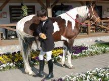 O cavaleiro novo penteia a cauda de skewbald Fotografia de Stock Royalty Free