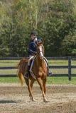 O cavaleiro procura a cerca seguinte no cavalo Fotografia de Stock Royalty Free