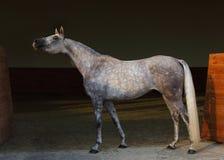 O cavalo árabe do puro-sangue, retrato do dapple a égua cinzenta com o freio da joia no fundo escuro imagem de stock royalty free