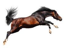 O cavalo árabe salta Imagens de Stock