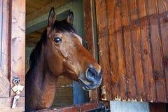 O cavalo 1 Fotografia de Stock