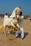 O cavalo Fotos de Stock
