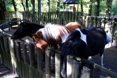 O cavalo Imagens de Stock Royalty Free